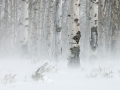 Winter Wind.jpg