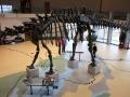 Dino-Natl-Mon-6410-800x600.jpg